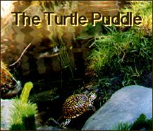 The Turtle Puddle